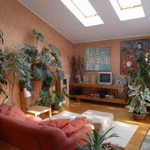 Rolę minioranżerii spełnia salon. Rośliny czynią z niego miejsce przepojone łagodnym, swojskim klimatem. Główne akcenty kolorystyczne czerwień i zieleń znalazły też w obrazach namalowanych przez siostrę właścicielki. Fot. Monika Filipiuk.