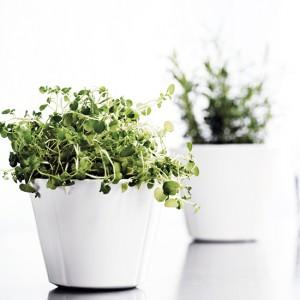 Doprawiamy ziołami...