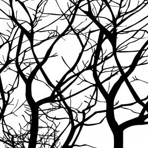 Gałęziście