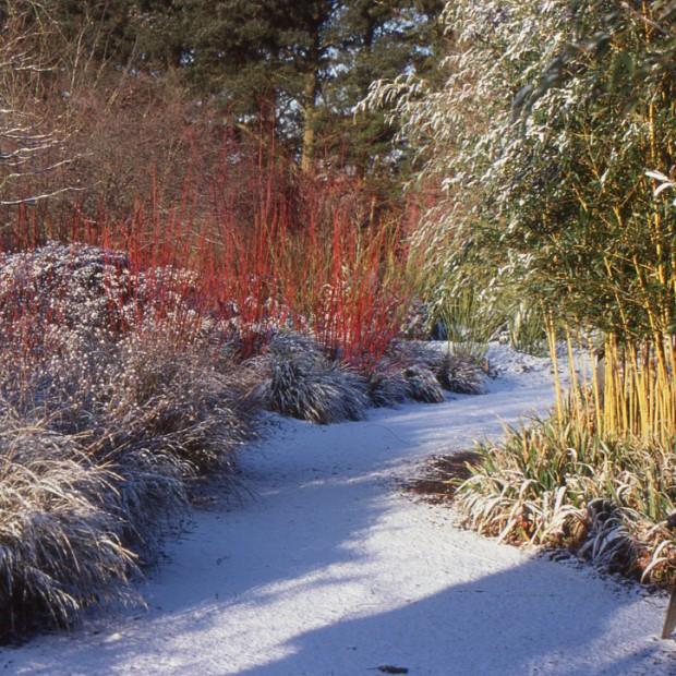 Ochrona roślin ogrodowych zimą