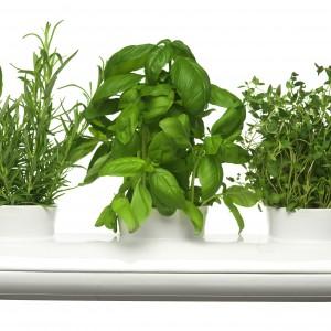 Dwuczęściowy wazon na trzy doniczki. Można w nim również trzymać już ścięte zioła, aby zachowały świeżość. Dzięki otworowi z boku wazonu w łatwy sposób można uzupełniać wodę w podstawce. Wykonany jest z kamionki. Wym.: dł. 40 cm, szer. 13 cm. 179,90 zł, Sagaform/Fide.