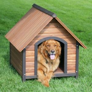 Zbyt mała powierzchnia i wysokość w stosunku do psa. Fot. Yourhomewizards