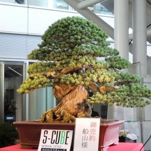 Styl Moyōgi (wyprostowany nieregularny) - należy formować jedną gałąź na lewo, drugą na prawo i trzecią do tyłu dla uzyskania perspektywy, czwartą gałąź na lewo itd. Wierzchołek drzewka musi leżeć na pionowej linii przechodzącej przez środek nasady pnia. Jest to styl najczęściej spotykany w światowych kolekcjach. Do formowania w stylu Moyōgi nadają się sosny i jałowce oraz większość drzew liściastych.