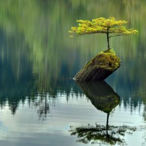 Bonsai. Sztuka miniaturyzacji drzew