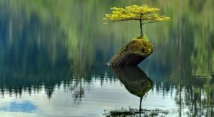 Jeśli mieszkasz w bloku i nie masz możliwości założenia ogrodu, możesz stworzyć kompozycję bonsai, która wprowadzi do wnętrza namiastkę naturalnego krajobrazu.