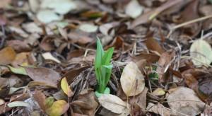 Zima powoli zbliża się ku końcowi. Czas rozpocząć oczyszczanieogrodu.