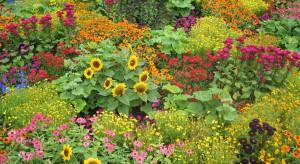 Wraz z przebudzeniem wiosennym świata roślinnego, oprócz zbierania pozostałych liści i grabienia trawy, należy przygotować glebę pod planowane uprawy.