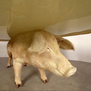 """Stolik projektu austriackiego artysty Armina Blasbichlera. Jako """"budulec"""" posłużyła wypchana świnia. Dobry pomysł do pokoju? Pozostawiamy to waszej ocenie. Fot. Armin Blasbichler Studio."""