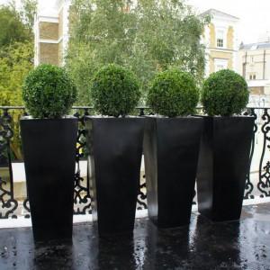 Fot. Londonplanters