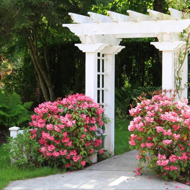 Drewniane pergole. Mała architektura ozdobą ogrodu