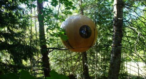 Marzysz o tym, aby uciec od miejskiego hałasu? Szukasz czegoś nowego? A może zwyczajnie się nudzisz? Wybierz życie na drzewie i poczuj się jak współczesny Tarzan.