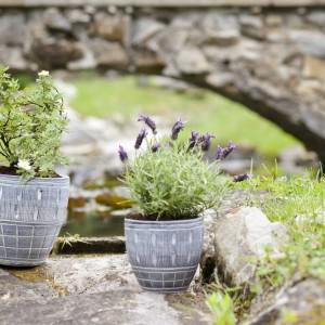 Małe, ogrodowe doniczki świetnie sprawdzą się jako miejsce na aromatyczne zioła i drobne rośliny. Fot. Galicja.
