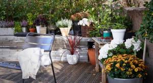 Wiklinowe kosze lubceramiczne doniczki. Pomysłów na ciekawą, jesienną dekoracją ogrodu, tarasu czy balkon jest bardzo wiele.<br /><br />