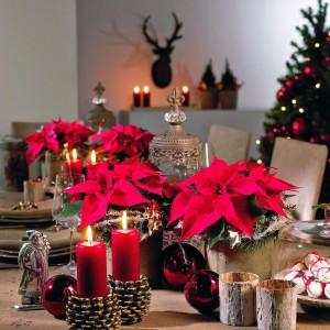 Bożonarodzeniowe dekoracje utrzymane w tradycyjnej czerwonej kolorystyce. Fot. Biuro Kwiatowe Holandia.