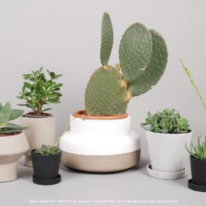 Donice o różnym kształcie i kolorystce w połączeniu z ciekawymi roślinami mogą stać się we wnętrzu prawdziwą ozdobą. Fot. Goodhood.
