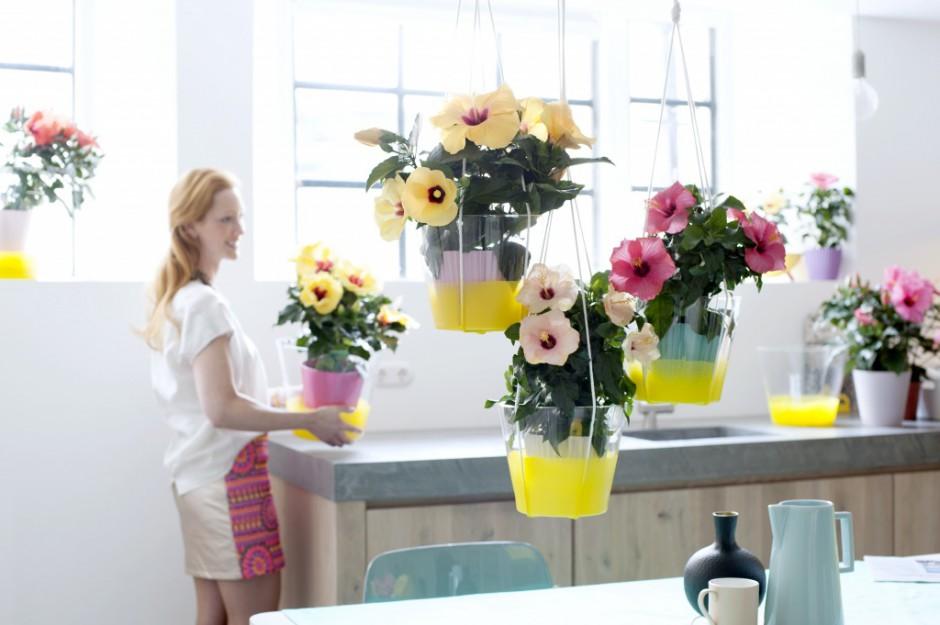 Hibiskus umieszczony w kolorowych, wiszących doniczkach pozwalają na oszczędność miejsca na blacie. Fot. Flower Council.