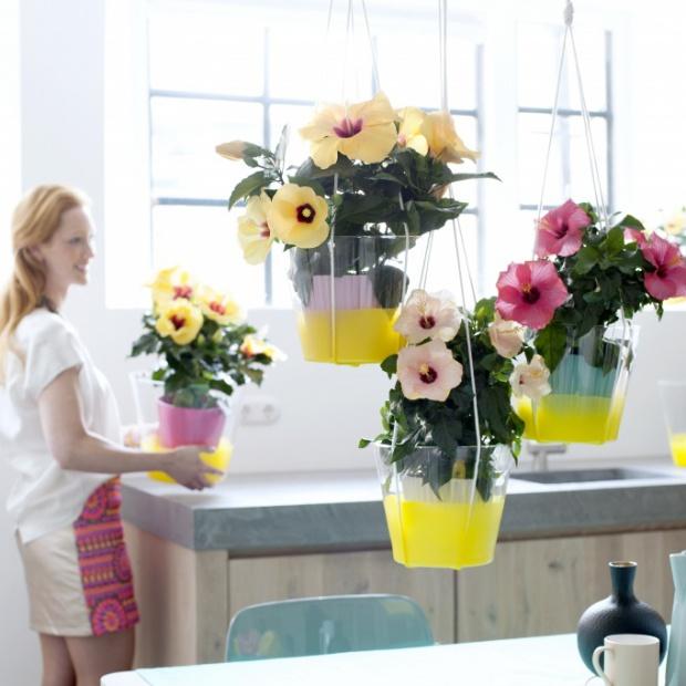 Wiosenne dekoracje: rośliny we wnętrzach