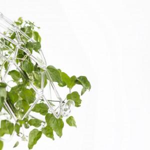 Odnowa to dedykowana do wnętrz formowana ręcznie w płomieniu rzeźba szklana, służąca za szkielet dla roślinności. Na obwodzie klosza mocuje się szklane fiolki wypełniane wodą, w których umieszczane są pędy pnączy. Fot. Agnieszka Bar.