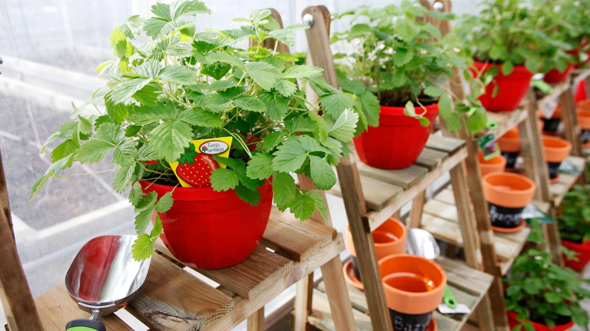 Kolekcja Smakowite Rośliny Leroy Merlin, fot. materiały prasowe