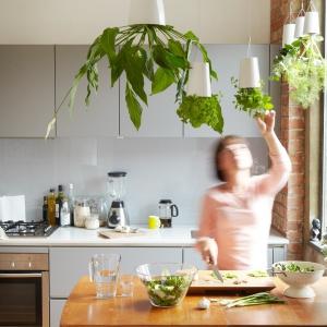 Lubisz rośliny, ale nie masz dla nich czasu? To patent dla ciebie