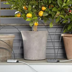 Zieleń na balkonie: ogród w donicy