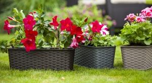 Aby cieszyć się bujną balkonową roślinnością powinniśmy zapewnić kwiatom optymalne warunki do rozwoju i wzrostu, takie jak: odpowiednie stanowisko, podłoże, doniczki.