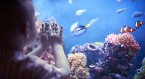 Zakup akwarium dla dziecka to doskonały pomysł. Posiadanie akwarium rozwija bowiem zainteresowania dziecka, wzbudza w nim pasję poznawania świata i pomaga mu w nauce. W rezultacie dziecko chętniej spędza czas przed akwarium, niż przed telewizorem c