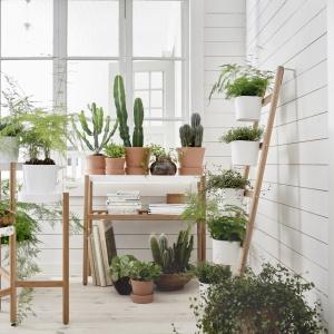 Bambusowy drabinowy stojak do roślin SATSUMAS na pięć doniczek umożliwia hodowanie kilku roślin razem w pionie. 179 zł. Fot. IKEA