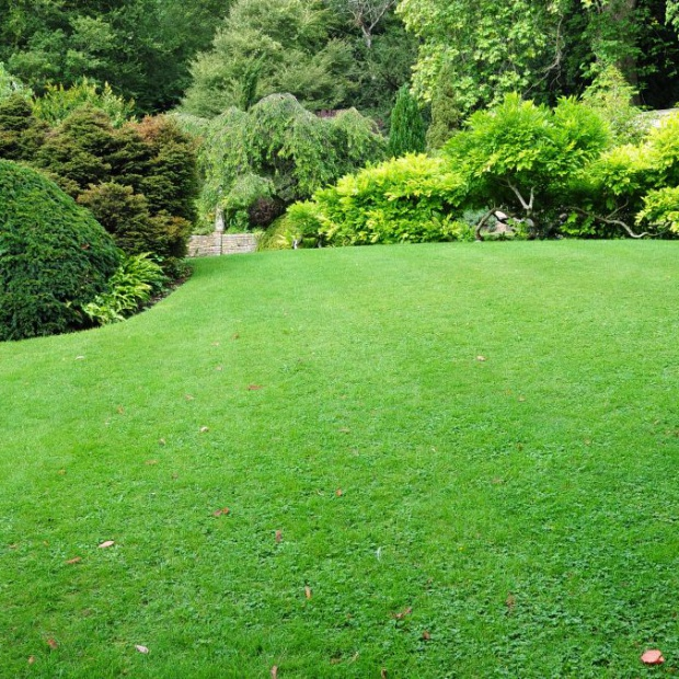 Piękny trawnik. Sprawdź jak go założyć jesienią