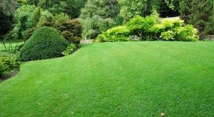 Trawnik o soczysto-zielonej barwie wokół domu i w ogrodzie sprawia przyjemność oczom, tworzy estetyczny pejzaż posesji, a przede wszystkim jest miejscem codziennego relaksu.