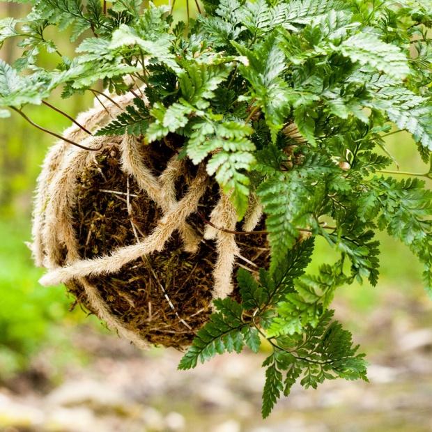 Uprawiaj rośliny bez doniczki. Nowa japońska sztuka