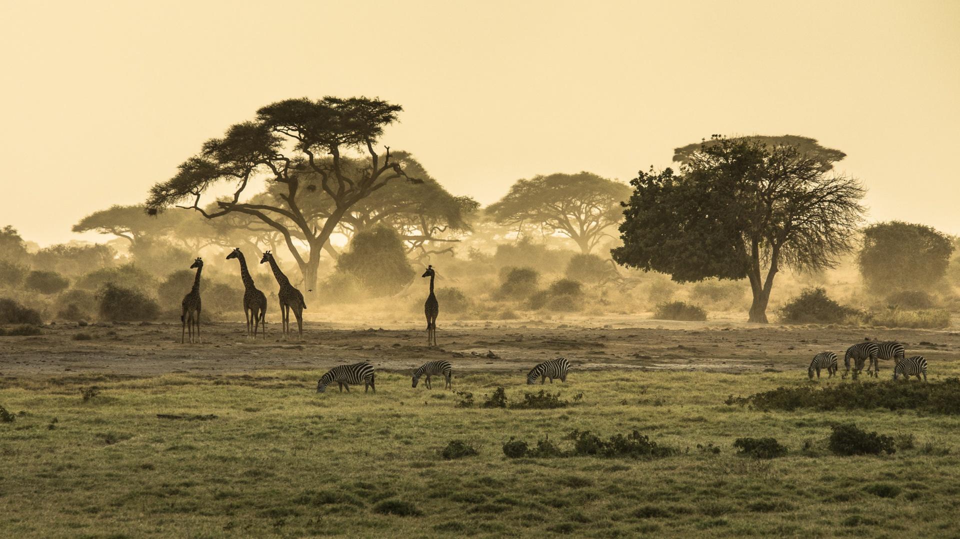 Fototapeta z motywem SAWANNA O ŚWICIE pozwoli na co dzień obcować z egzotyczną naturą Afryki. 273 zł (204x135 cm). Fot. Pixers