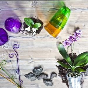 Kwiaty w domu - storczyki nie wychodzą z mody