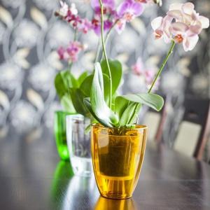Kwiaty w domu: moda na storczyki. Fot. Galicja dla Twojego Domu