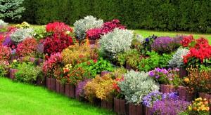 Ogrody wertykalne są oryginalnym sposobem na aranżację zieleni wokół domu i wprowadzenie ożywczej roślinności na niewielkich przestrzeniach. Z ich pomocą możliwe jest także maskowanie mało estetycznych murów oraz formowanie ogrodzeń.