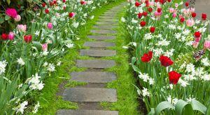 W planie prac na koniec kwietnia i początek maja, oprócz zadbania o trawnik, warto uwzględnić przygotowanie podłoża pod uprawy – rabaty kwiatowe, ogródek warzywny i ziołowy, oraz pielęgnację trawnika.