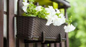Już wkrótce zakwitną balkony. Upragniona zieleń otoczy nas swoim pięknem, co sprawi, że chętnie będziemy spędzać każdą wolną chwilę w niewielkich prywatnych ogrodach.