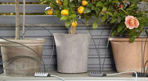 Jeśli nie masz wystarczająco dużo czasu na pielęgnację ogrodu lub posiadasz balkon i na prawdziwy ogród nie masz miejsca, zrób swój miniaturowy ogród w donicy.