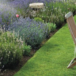 Pielęgnacja trawnika. Trawnik w ogrodzie. Fot. Honda