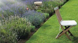 Od maja do jesieni najczęściej wykonywanym na trawniku zabiegiem pielęgnacyjnym jest koszenie, praca, która jednocześnie jest sztuką – sztuką pielęgnacji trawy i sztuką posługiwania się kosiarką.