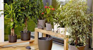 Wybierając się na urlop można zapomnieć o uschniętych roślinach, jakie zastaniemy w domu po powrocie z wakacji. Dzięki automatycznej konewce rośliny będą miały stały dostęp do wody.