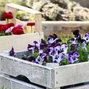 Kolorowe kwietniki ze skrzynek po owocach to niedrogi sposób na efektowną dekorację. Fot. Viva Garden