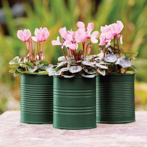 Puszki po groszku czy fasoli można przy pomocy farby zamienić w ciekawe doniczki na kwiaty. Fot. Viva Garden