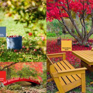 Jesienna aranżacja ogrodu. Fot. Altax Viva Garden