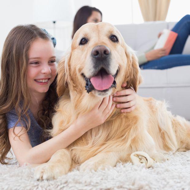Zwierzę w domu. 4 produkty, które ułatwią ci sprzątanie