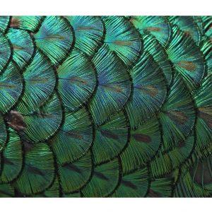 Dekoracja ścienna Green Feather. 439 zł. Fot. Westwing
