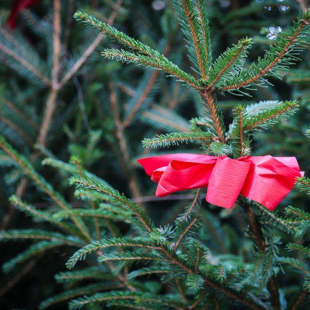 Choinka bożonarodzeniowa – jakie są jej rodzaje i jak o nią dbać?