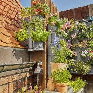 Ogród wertykalny. Fot. Gardena