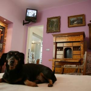 Z najważniejszego punktu pokoju – łóżka, można obserwować otoczenie lub pooglądać telewizję. Jak widać, jest to miejsce lubiane przez wszystkich domowników... Fot. Paweł Supernak.