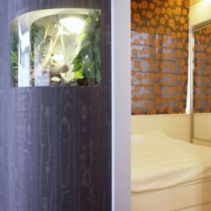 Legwana Helmuta, można podziwiać zarówno z salonu, jak i sypialni. Jednak dostęp do terrarium jest tylko od strony sypialni. Fot. Monika Filipiuk.